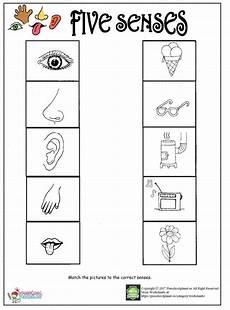 the five senses worksheets 12571 printable five senses worksheet preschoolplanet