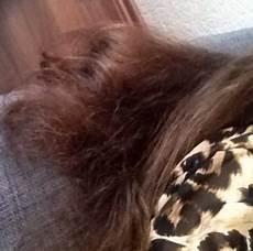 Trockenes Haar Und Haarspitzen Was Tun Haare Pflege