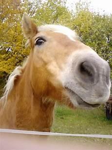 welche pferderasse passt zu mir welches pferd passt zu mir seite 10