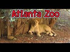 am zoo atlanta zoo hd 1080p