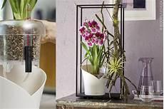 wie pflegt orchideen tipps und tricks zur orchideenpflege