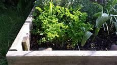 semer le persil comment et quand semer planter du persil