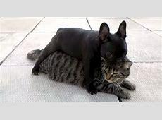 """""""Get off my back""""   Dogtime"""