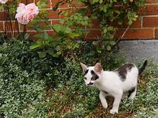 S Erster Freigang 1 Foto Bild Tiere Haustiere