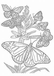 Ausmalbilder Erwachsene Insekten Ausmalbild Ganz Viele Schmetterlinge Zum Kostenlosen