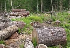 Penebangan Hutan Secara Liar Dan Tidak Bertanggung Jawab