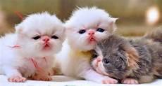 Tips Merawat Anak Kucing Yang Baru Lahir