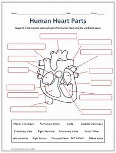 human heart parts and flow labeling worksheets