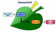 Welche Pflanze Produziert Am Meisten Sauerstoff - gemeinde ell page 3