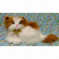 Gambar Kucing Warna Putih