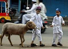 Funny Bakra Eid E Qurban Wallpapers Photos Pictures