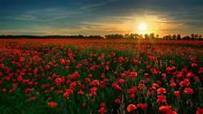 field flowers poppy sun landscapes ultra hd wallpaper