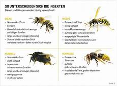 wespen hornissen imkerverein schloss neuhaus evs webseite