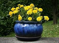 191 qu 233 plantas se pueden cultivar en macetas