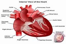 Konsumsi Garam Berlebih Awas Serangan Jantung Antara