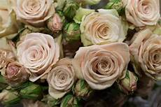 quicksand spray roses blush at new covent garden flower market april 2016 in 2019 coral