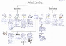 animal kingdom worksheets middle school 13932 classification of animals vertebrates and invertebrates things to wear