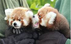 the adorable animals born around the world this week