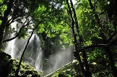 Waknal Hutan Royal Belum With Kuku Besi