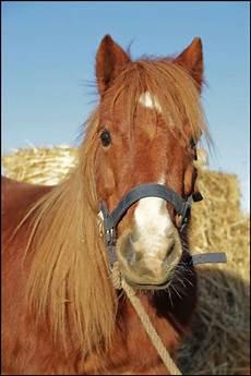ffe trouver un cheval les chevaux