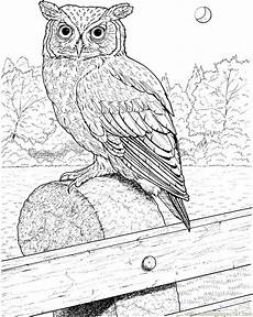 great horned owl coloring page free printable coloring