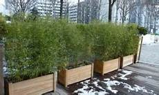 grande jardinière pour bambou bambous pour pots et jardini 232 res vente bambous leaderplant