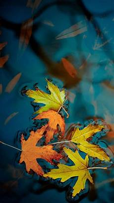 iphone 7 wallpaper fall falling leaves on the water apple iphone 7 hd