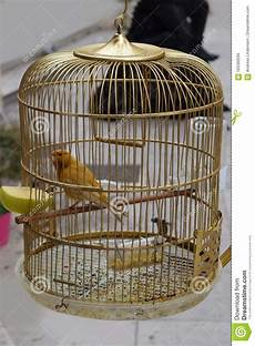 gabbia uccello uccello una gabbia dorata stock photos royalty free pictures