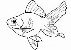 ausmalbilder fische 17 ausmalbilder tiere