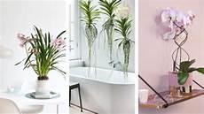 orchideen neuer styling test mit deko tipps gabot de