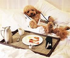 pet friendly hotels pet friendly hotels around the u s instyle com