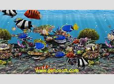 3D Fish School Aquarium Screensaver   Tropical Fish Tank