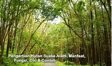 Pengertian Hutan Suaka Alam Manfaat Fungsi Ciri Contoh