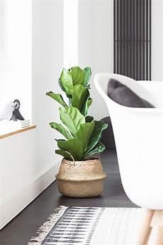 große pflanzen fürs wohnzimmer gr 252 nes wohnzimmer wohnzimmer pflanzen gr 252 npflanzen zimmer und topfpflanzen terrasse