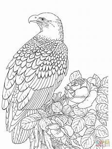 realistischer wei 223 kopfseeadler coloring tiere