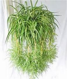 plantes d appartement retombantes fleuriste bulldo