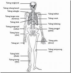Sistem Muskuloskeletal Catatan Awwaludin