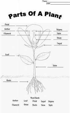 science worksheets about plants for grade 4 13722 parts of a plant worksheet find a flower to dissect and glue appropriate parts to sheet