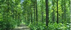 Potensi Sumber Daya Hutan Arif Pandu Winata