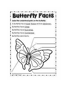 grade 3 science worksheets insects 12532 parts of a butterfly butterfly cycle kindergarten lessons kindergarten themes