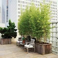 bambus für balkon kann ich bambus im k 252 bel halten balkon haus garten zenideen