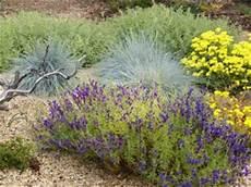 gräser im steingarten gr 228 ser und farne f 252 r den garten die parzelle