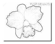 orquidea de venezuela para colorear dibujos patriotas venezolanos para colorear buscar con google venezuela para colorear