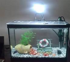 petit aquarium 10l forum aquarium
