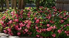 terrazzo fiorito tutto l anno piante da ombra guida completa per un giardino fiorito