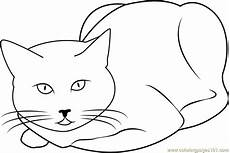 Katze Sitzend Malvorlage Cat Sitting And Staring Coloring Page Free Cat Coloring