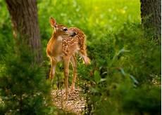 Nature Animals Wallpaper Hd