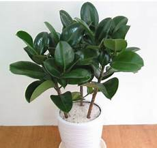 feng shui pflanzen reichtum feng shui plant feng shui tips feng shui tips