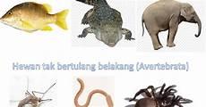 Hewan Vertebrata Dan Avertebrata Invertebrata Berbagi
