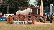 Tamme Hanken Pferd - tamme hanken mit jumper in tarmstedt